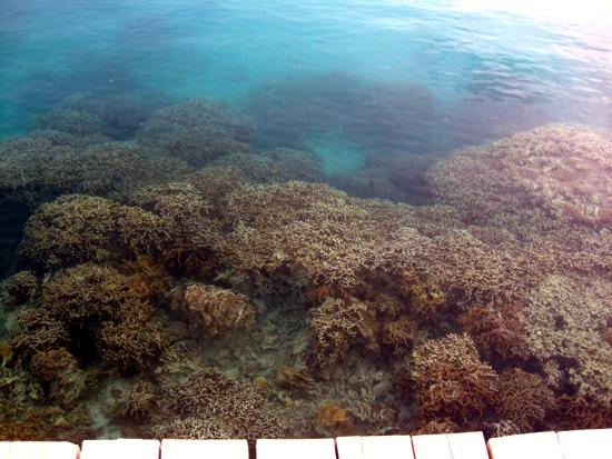 Pulau Tidung coral