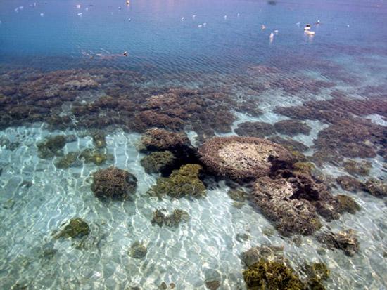 Pulau Tidung underwater