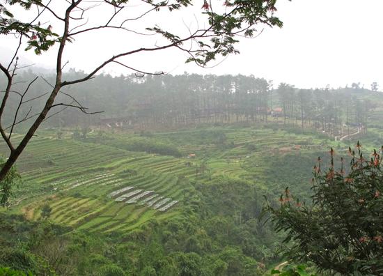 Candi Gedong Songo - pemandangan ke bawah