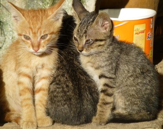 Anak-anak kucing bersantai