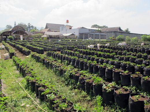 Happy Farm - strawberry farm 2