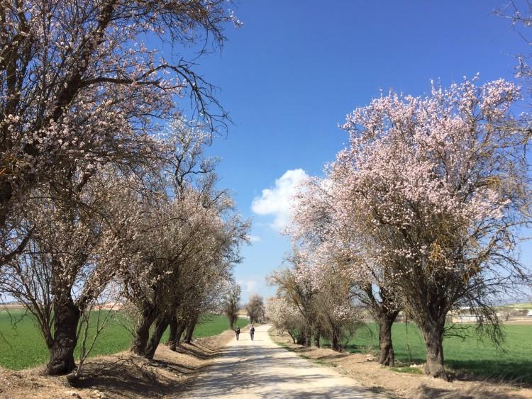 Camino Mozarabe day 2