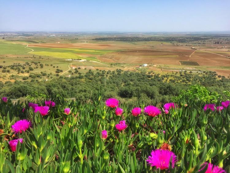 Camino Mozarabe day 15