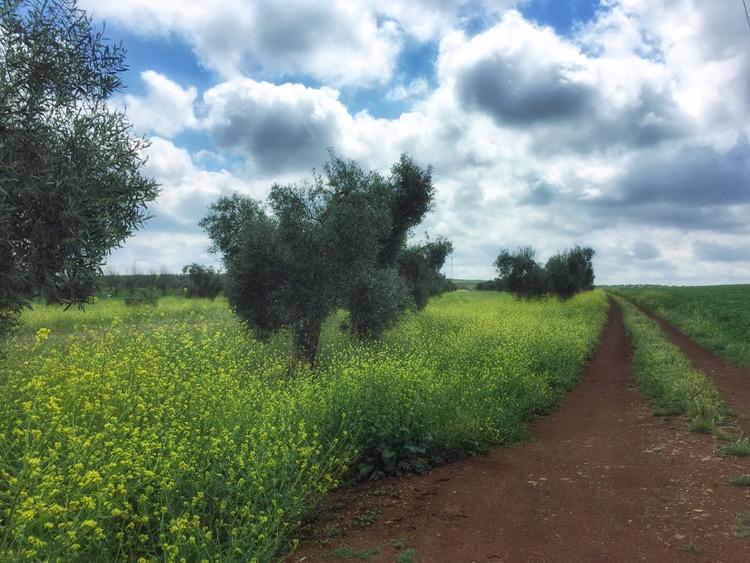 Camino Mozarabe day 18