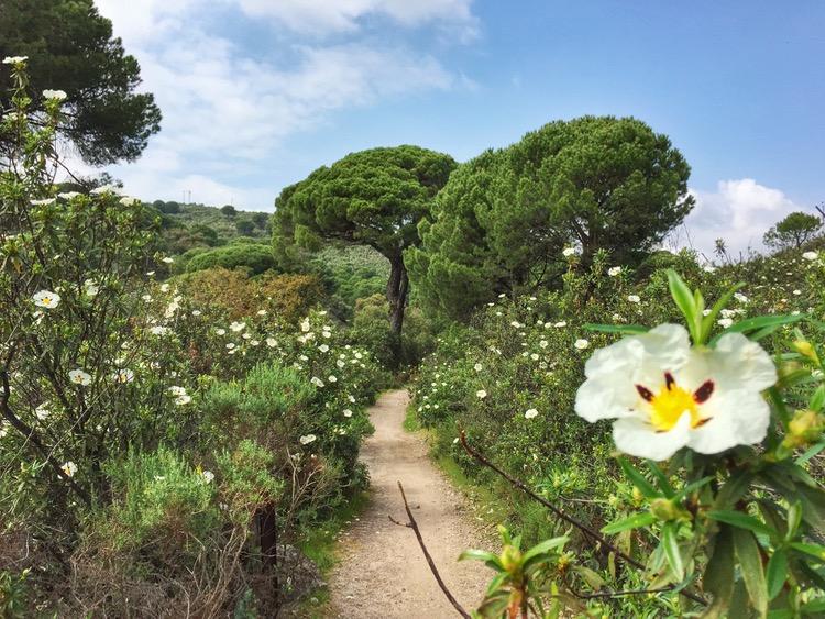 Camino Mozarabe day 8