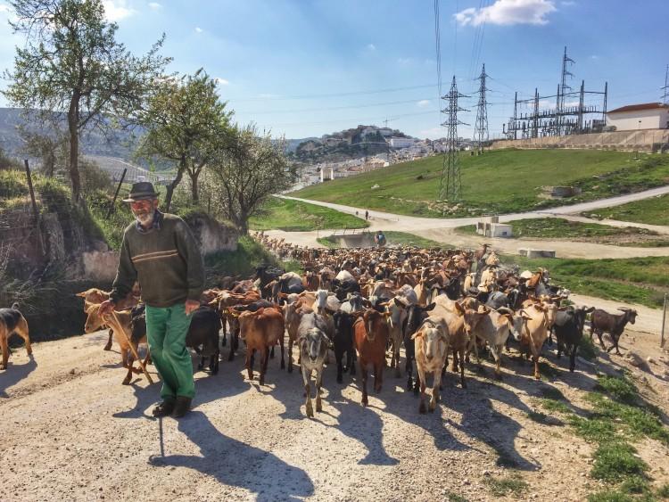Camino Mozarabe day 4