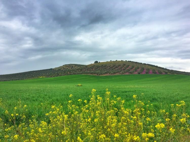 Camino Mozarabe day 6